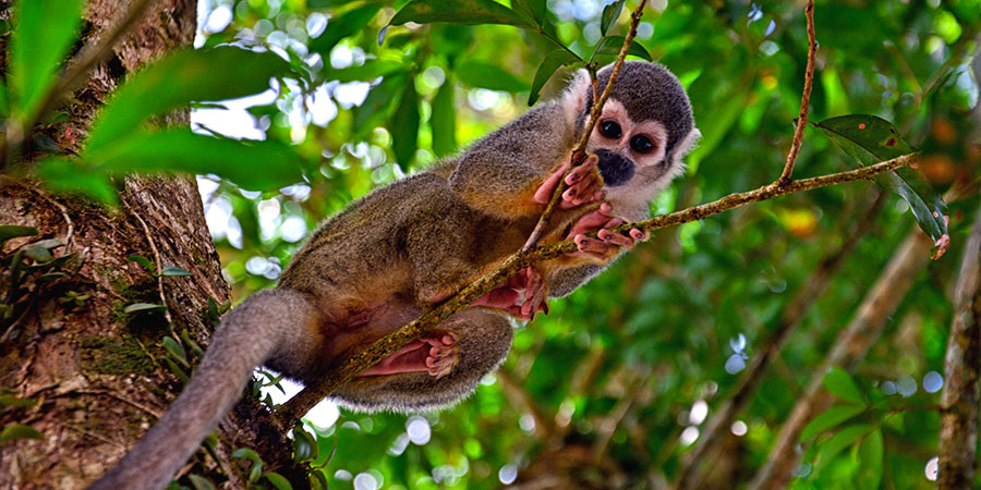 Amazonie Équateur & Galápagos Beatriz Aebischer Créatrice de Voyages