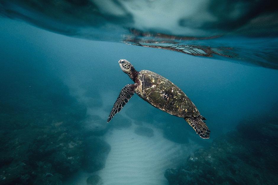 L'Équateur & les Galápagos 4 Beatriz Aebischer Créatrice de Voyages