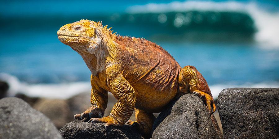 Galapagos1 Équateur & Galápagos Beatriz Aebischer Créatrice de Voyages